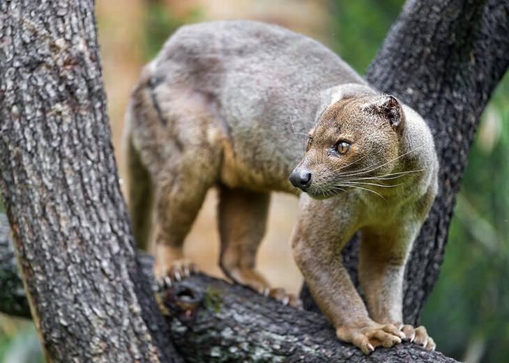 madagascar-animals