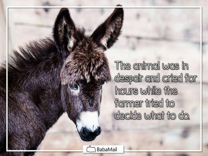 donkey moral