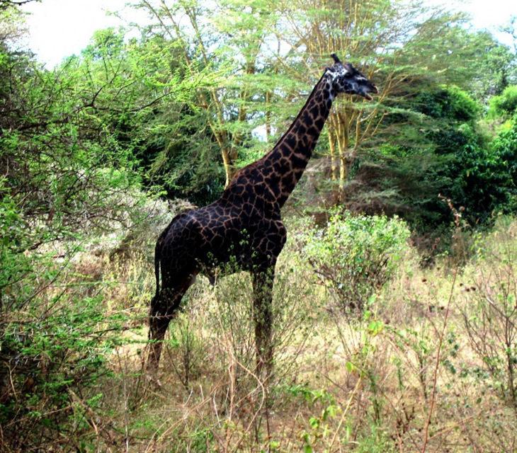 15 Beautiful All-Black Melanistic Animals | Nature - BabaMail