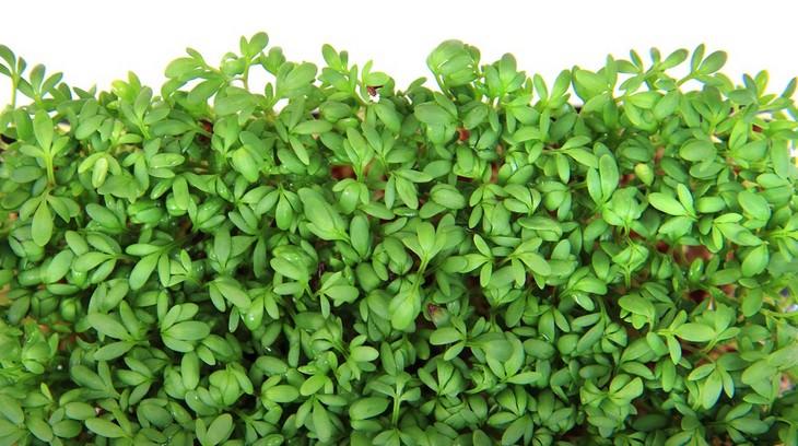 watercress, health benefits,