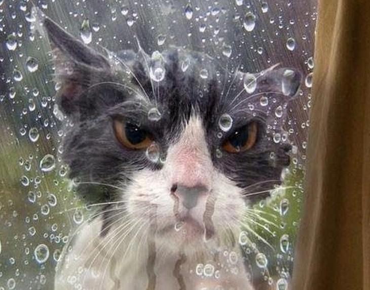 cats, funny, fails
