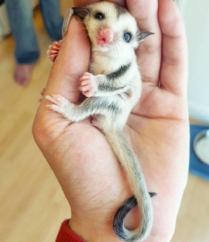 Rare - Baby - Animals