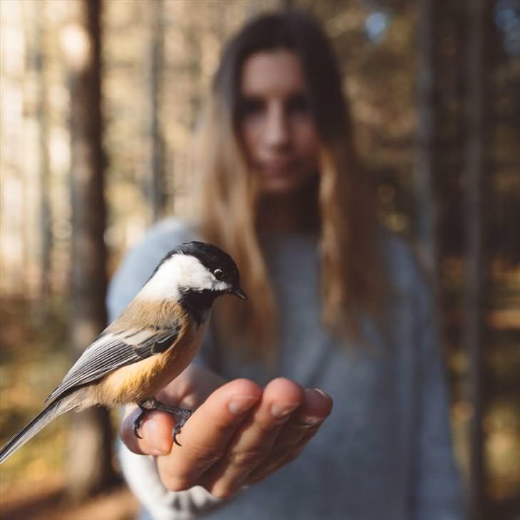 wildlife-photography-beautiful