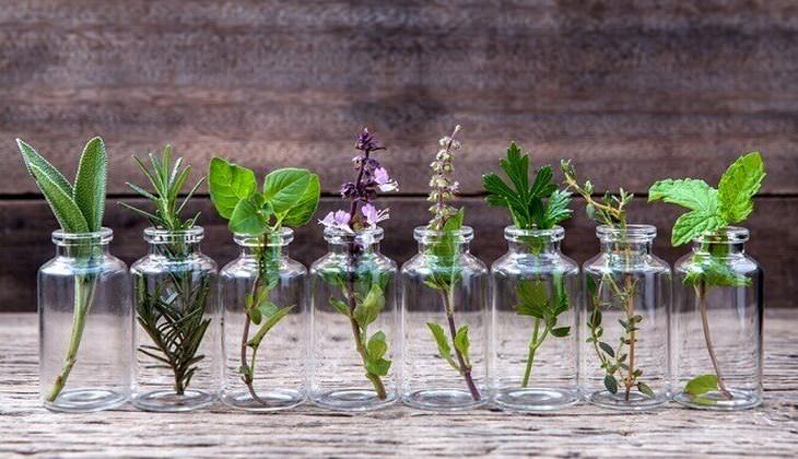 grow herbs in water