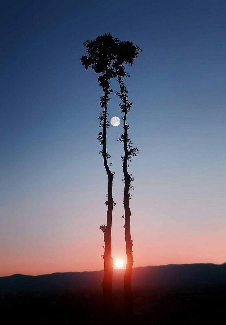 photo of the day, tree, moon, sun