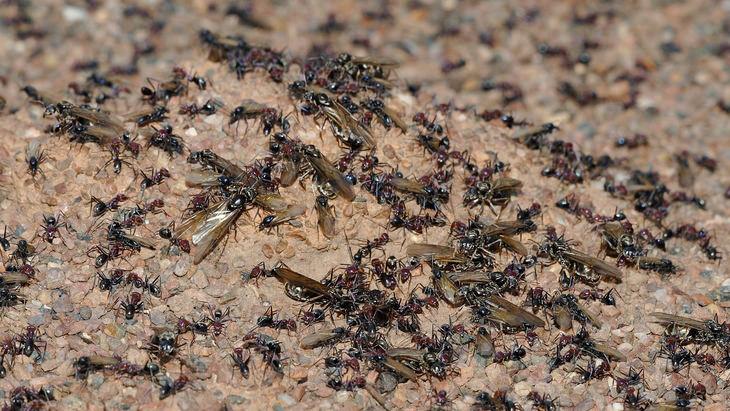 ants-reup