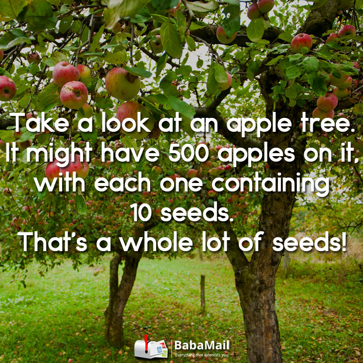 law-of-the-seed