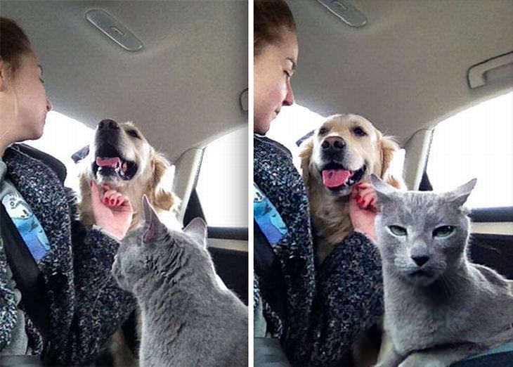 Hilarious Cat Expressions
