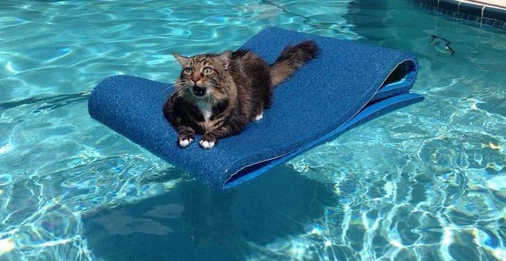 15 gatos hilários que se deram mal
