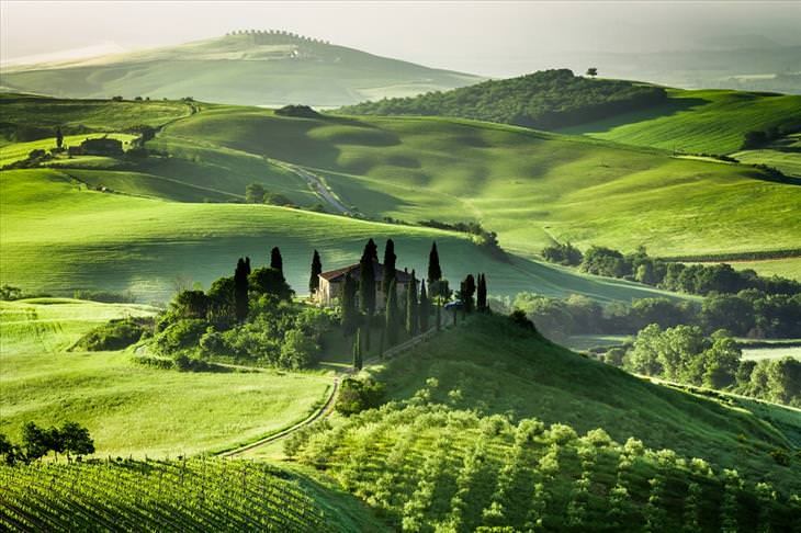 phot of the day, Tuscany, field, April