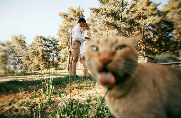 funny, photos, cats, cute
