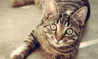 gato olhando para a câmera