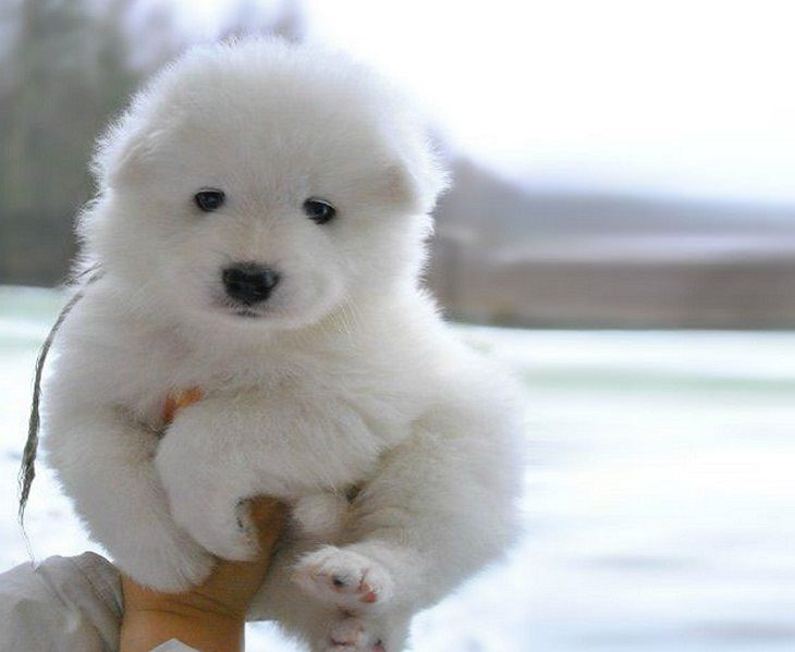 Best Puffy Chubby Adorable Dog - 8aad73f0-8774-435e-8307-be9f864294bd  Perfect Image Reference_949061  .jpg