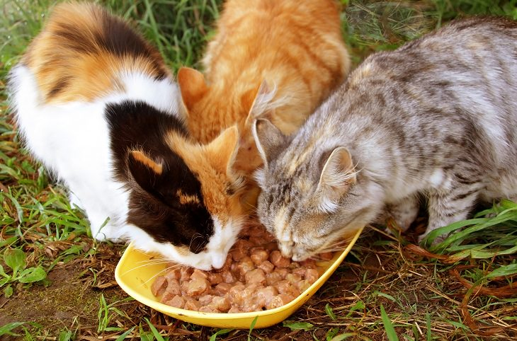 How To Get Rid Of Stray Cats In Your Backyard how to get rid of stray cats | tips and updates - babamail