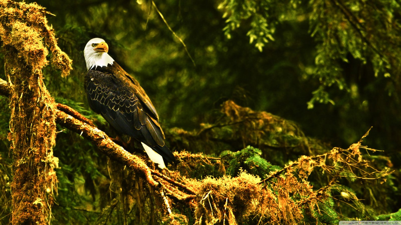 15 Beautiful Photos & Interesting Facts About Eagl ...