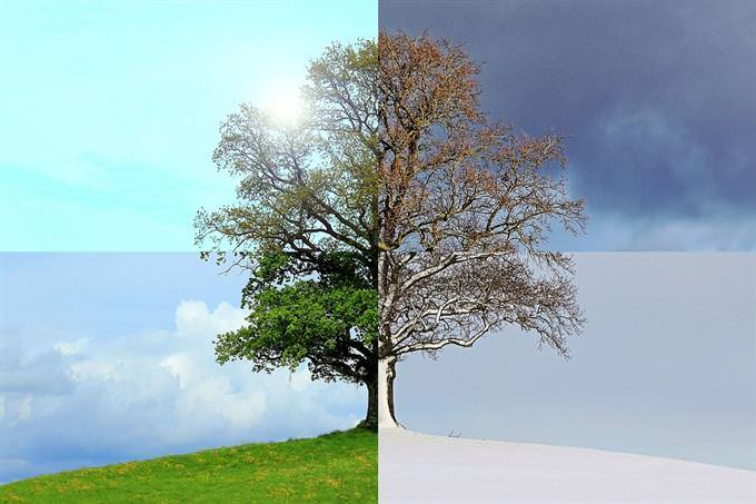 A tree showing all four seasons