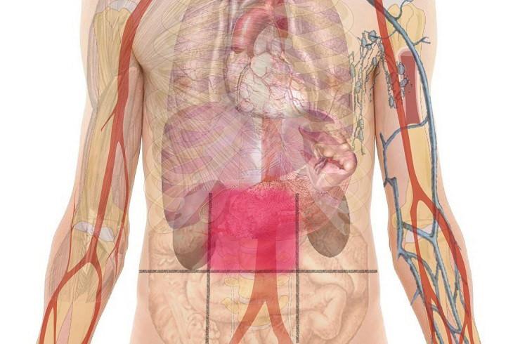 Abdominal Pain Map | Health - BabaMail