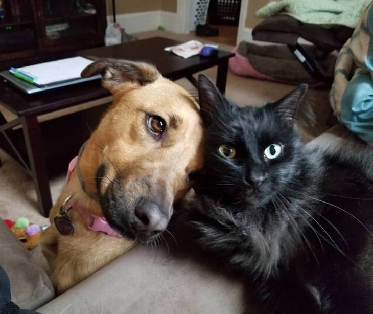 two-pets
