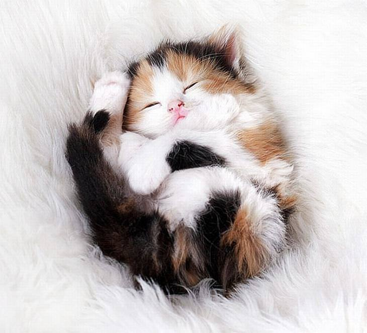 75 insanely cute kittens cute overload babamail