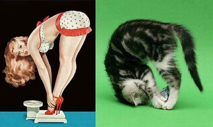 cats-pin-up-girls