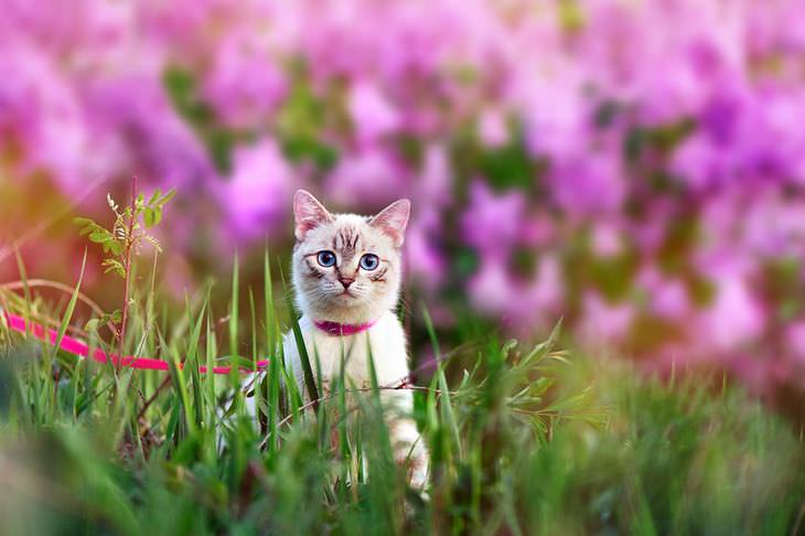Keep Cats Away Tips And Updates Babamail