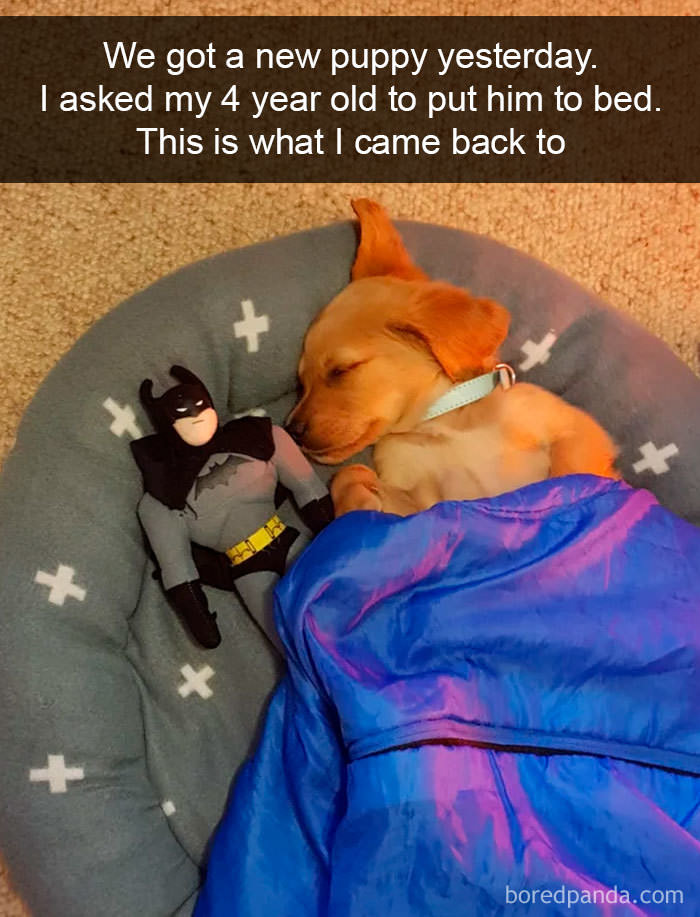 Laugh Funny And Cute Doggy Snapchats Collegehumor Funny And Cute Snapchats Funny Babamail