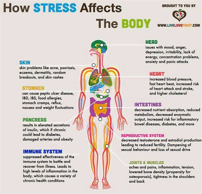 the symptoms of long term effect of stress Beware stress could cause serious long-term effects from stressfocuscom the long term and short term effects of stress on the.