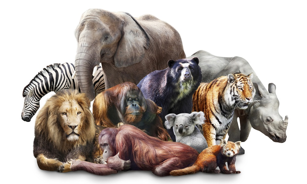 Group of animals images