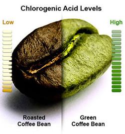 green coffee bean vs brown