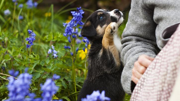 puppy with owner among flowers