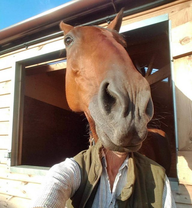 Photo taken at just the right time, man taking selfie with a horse's head