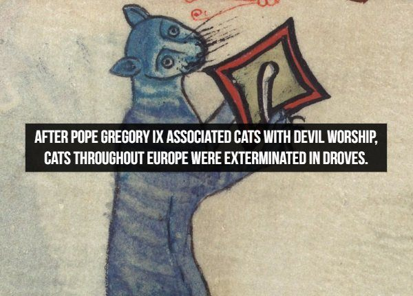 Amazing historical facts, extermination of cats in Europe on order of Pope Gregory IX