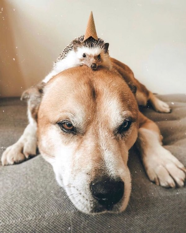 cute overload, adorable, nature, hedgehog, instagram, cat, dog, pictures, design and photography, Herbee