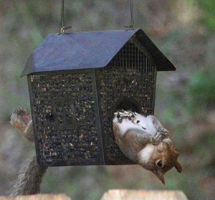 funny and odd pictures of animals and their antics, squirrel in bird house