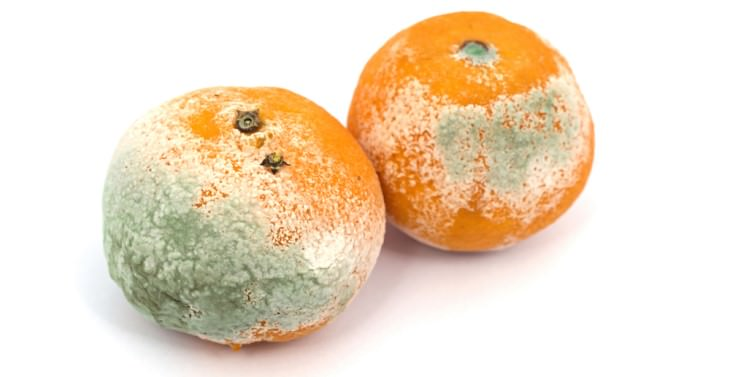 what is mold moldy oranges