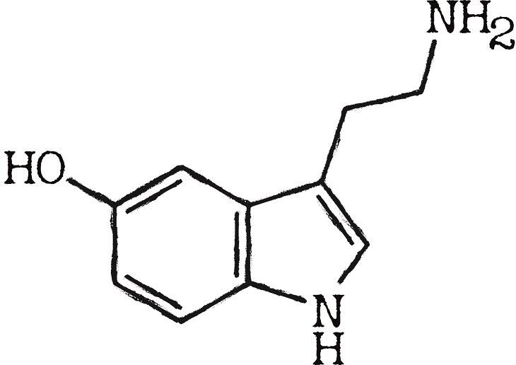 Serotonin, the brain, chemistry, hormones, science, mental health, depression, anxiety, stress, neurotransmitters