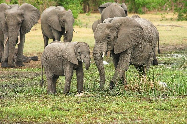 Elephants, Respect, Dead, Killing Rhinos, Young, Strange Animal Behavior