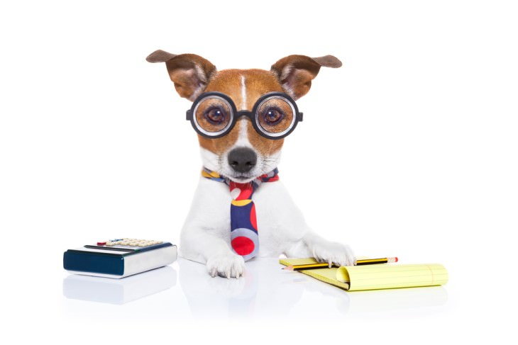 joke dog with glasses and calculator