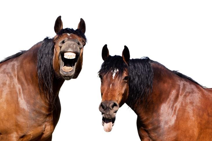short jokes horses laughing