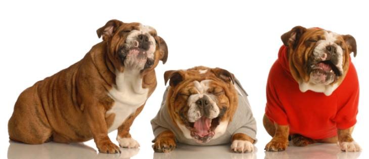 short jokes dogs laughing