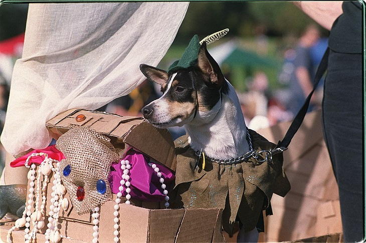 photographs, picture, animals, pets, dogs, cats, art, cute overload, costume, halloween, dress, outfit, nature