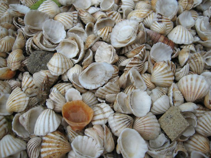 nature, ocean, crabs, snails, slugs, Shells, freshwater, coast, seashell, shore, collecting