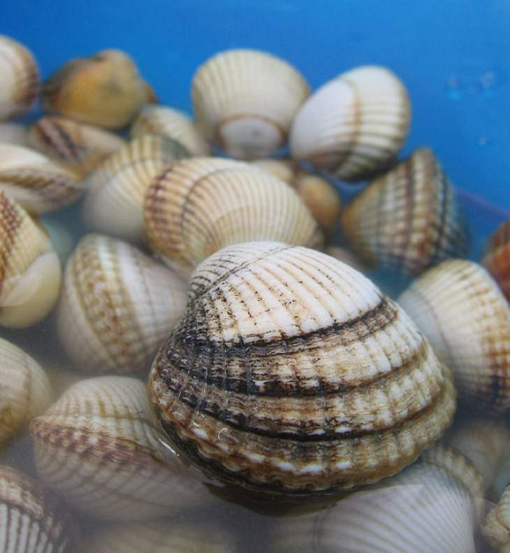nature, ocean, crabs, snails, slugs, Shells, freshwater, coast, seashell, shore, collecting