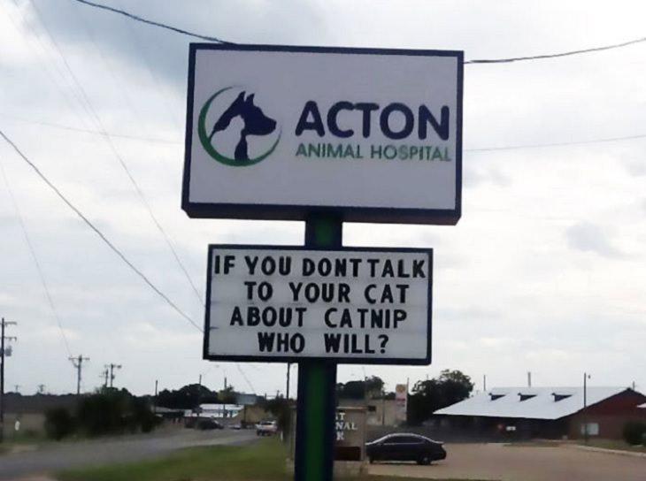funny, cute overload, cats, jokes, kittens, veterinarian, clinic, hospital, animal, nature, sign, puns,