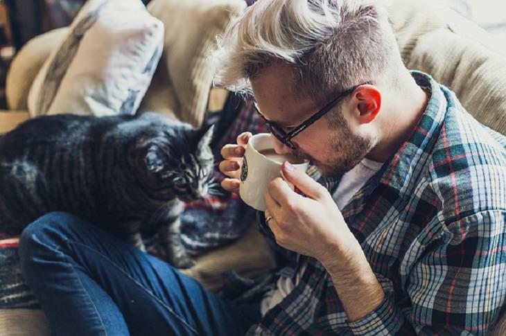 health, pets, cat, kitten, emotion, loyalty, attachment, affection, bond, socialize, experiment, SBT,
