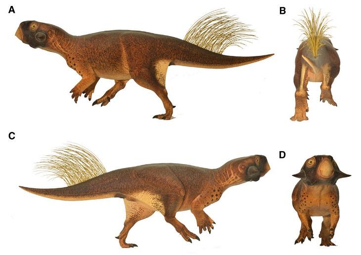 Cutest Dinosaurs Psittacosaurus