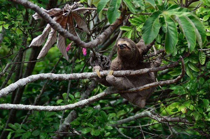 Animal Stereotypes Sloths lazy