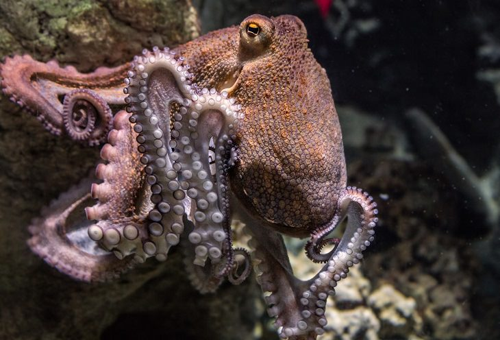 Animal Senses Octopus Polarization