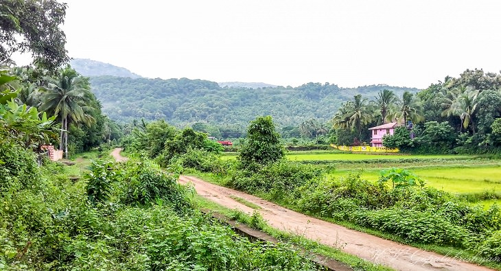 Sights and must-see destinations in the tourist state in India, Kerala, also known as God's Own Country, Road to Chenangad Village near Ottappalam district