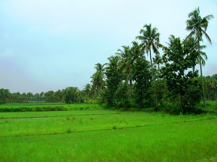 Sights and must-see destinations in the tourist state in India, Kerala, also known as God's Own Country, The Paddy Fields of Thrissur district